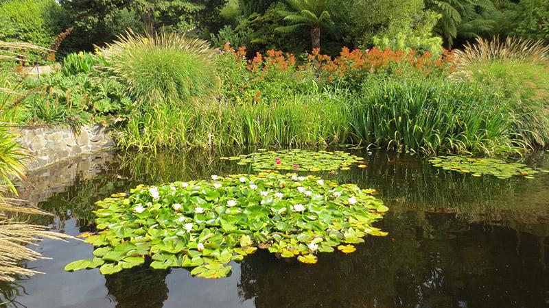 Gartenteich Uferbepflanzung leicht gemacht Gartenteich Hilfe ~ 27032343_Gartenteich Pflanzen Wachsen Nicht