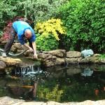 Gartenteich Reinigung