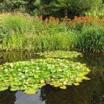 Uferbepflanzung am natürliches Biotop
